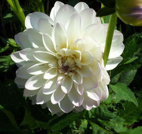 Acheter une plante fleurie