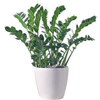 acheter une plante On acheter une plante verte