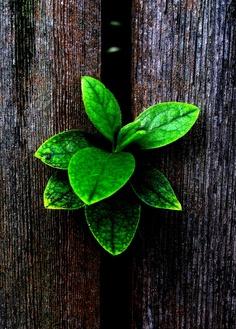 Plantes vertes pour la décoration d'intérieur