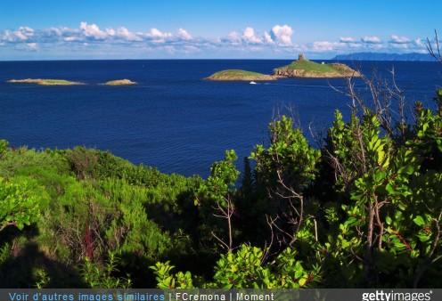 Plantes sauvages de Corse : les connaître et les reconnaître