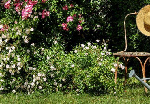 Donnez vie au jardin de vos rêves