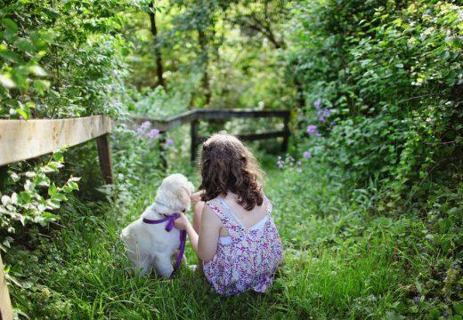 Chien au jardin : attention aux plantes toxiques