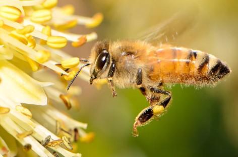 Comment protéger les abeilles dans votre jardin ?