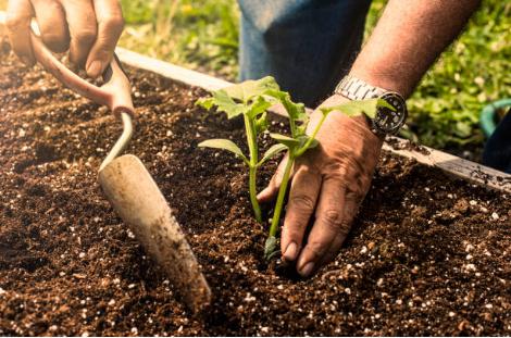 Quoi planter et quand dans son potager ?