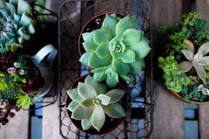 Bacs de fausses plantes grasses vues de haut