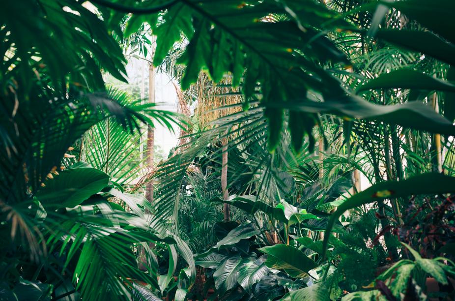 Plantes artificielles vert profond
