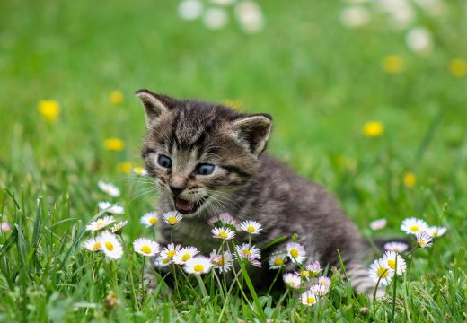 Adoption d'un chaton : sécuriser son jardin