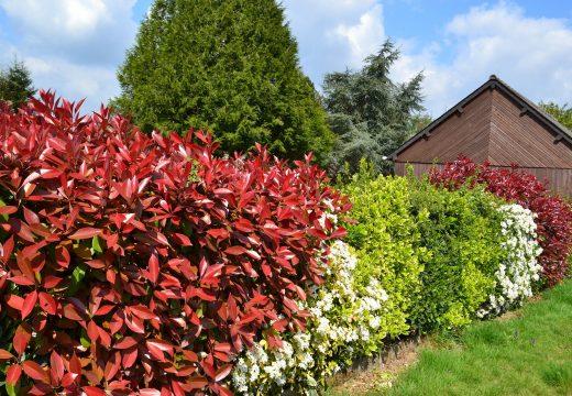 Jardin : comment se protéger du vis-à-vis ?