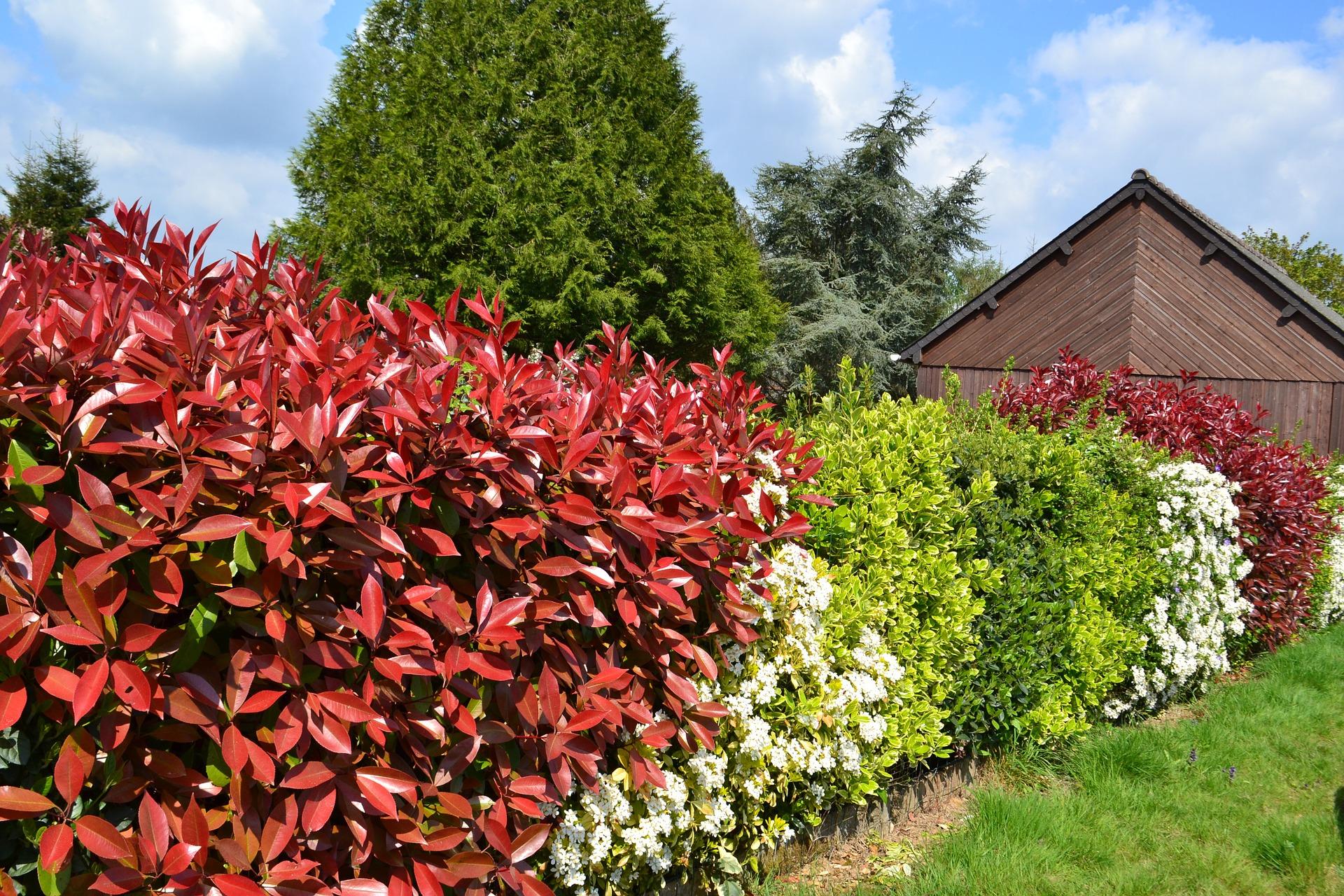 Haie composée de plusieurs types de buissons de couleurs différentes