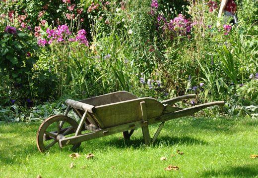 Conseils pour un jardin en bonne santé