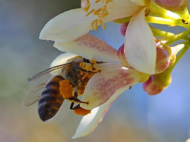 Comment attirer les abeilles dans son jardin ?
